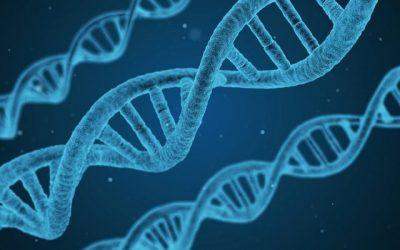 """Mieloma: uno studio identifica le cause partendo dal """"pedigree umano"""""""