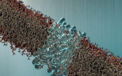 Significato della MGUS per il mieloma multiplo